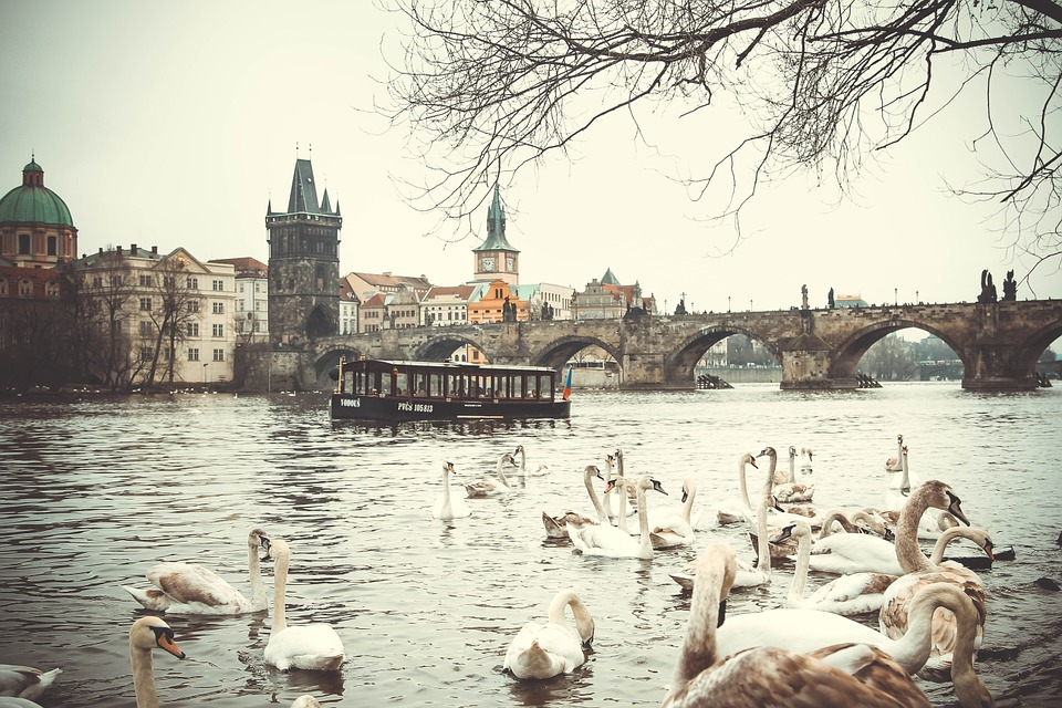 What to do in Prague in February? Come to feed swans!:)